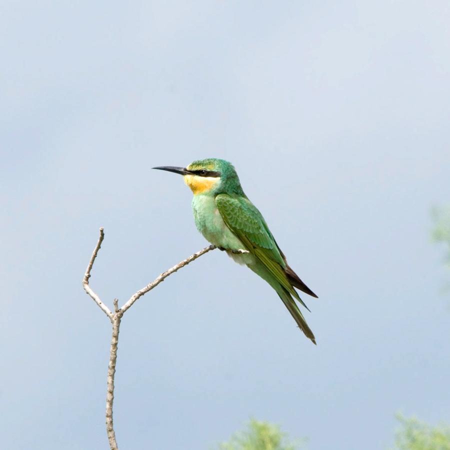 птица с длинной шеей зеленая отключать лямбда-зонд? вот